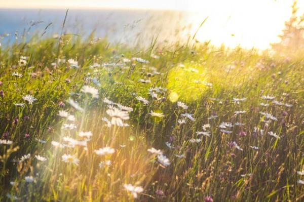 bloom-blossom-daytime-837494